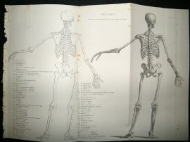 Anatomy: C1875 Set of 5 Antique Prints